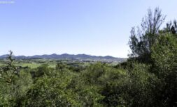 Großes Grundstück mit traumhaftem Panoramaweitblick über Manacor – Wohnsiedlung Son Talent