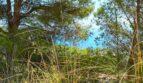 ... in natürlicher Umgebung