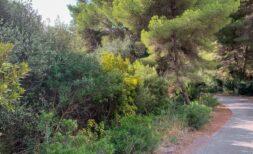 Investitionsprojekt: Schönes Grundstück von ca. 1000m² in ruhiger Lage