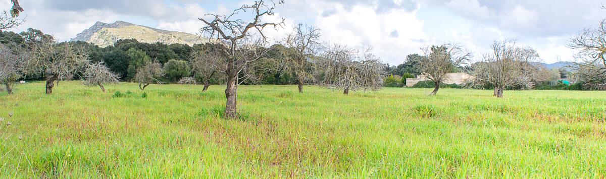 Bild zum Objekt: 62.000m² Grundstück mit Stromanschluss & Brunnen zum Verkauf