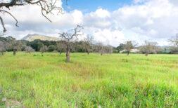 Großes Grundstück für Ihr Einfamilienhaus mit idealer Anbindung und landwirtschaftlicher Nutzfläche