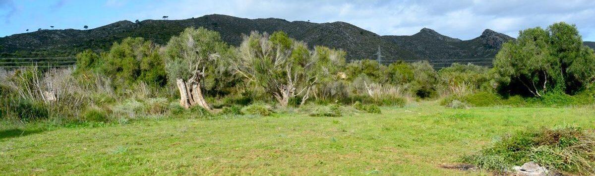 Bild zum Objekt: 17.140m² Finca-Grundstück im Osten Mallorcas zum Verkauf