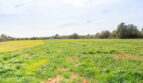 ...und viel Weidefläche
